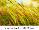 Wheat Field Landscape Late...