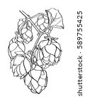 hops beer vector illustration   ... | Shutterstock .eps vector #589755425