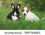 Cute Puppy And Rabbit Posing...