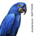 hyacinth parrot portrait drawing | Shutterstock . vector #589770359