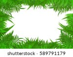 leaf isolate and white... | Shutterstock . vector #589791179