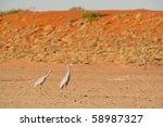 brolgas at cravens peak station | Shutterstock . vector #58987327