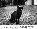 Stock photo black cat portrait on street morocco essaouira sity cat looking at the camera predatory glance 589879529