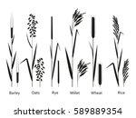 cereals plants set.... | Shutterstock .eps vector #589889354