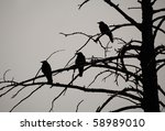Silhouette Of Three Crows In A...