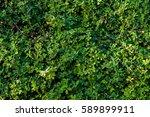 Nature Green Shrubbery...