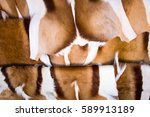 close up of springbok skin... | Shutterstock . vector #589913189