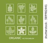 vector set abstract organic... | Shutterstock .eps vector #589982441