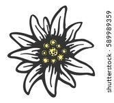 edelweiss flower symbol...   Shutterstock . vector #589989359