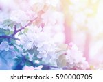 spring branch with white flowers | Shutterstock . vector #590000705