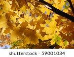 yellow autumn leaves | Shutterstock . vector #59001034