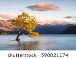 beautiful tree inside the lake... | Shutterstock . vector #590021174