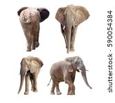 African Elephants Isolated White Collage - Fine Art prints