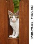 Stock photo kitten on the wooden fence 59007583