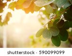 autumn green leaves bokeh... | Shutterstock . vector #590099099