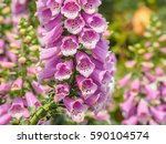 Summer Flowers Series  Macro...