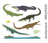 cartoon green crocodile danger... | Shutterstock .eps vector #590129225