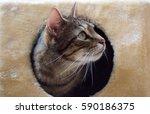 Stock photo lazy sunday on the cat tree 590186375