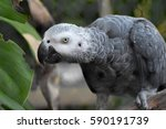 parrot | Shutterstock . vector #590191739