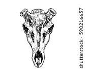 deer's skull hand drawn stock... | Shutterstock .eps vector #590216657