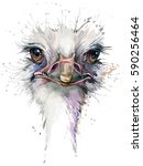 ostrich watercolor illustration | Shutterstock . vector #590256464