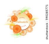 calendula vector. decorative...   Shutterstock .eps vector #590285771