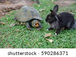 Small photo of Turtle eats the rabbits food, turtle wins.