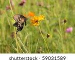 butterfly in field of wild...   Shutterstock . vector #59031589