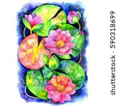 beautiful watercolor background ... | Shutterstock . vector #590318699