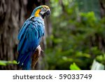 Colorful Scarlet Macaw Perche...