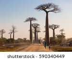madagascar  africa  september... | Shutterstock . vector #590340449