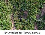 moss in the forest | Shutterstock . vector #590355911