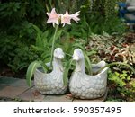 beautiful flower  duck dolls ... | Shutterstock . vector #590357495