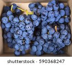 Clusters Of Mature Grapes In A...