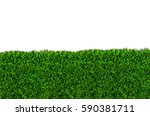 green grass isolated on white... | Shutterstock . vector #590381711