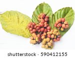 fresh coffee beans isolated on... | Shutterstock . vector #590412155