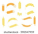 ears of rye. agricultural... | Shutterstock .eps vector #590547959