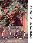 bicycle with red flowers in the ... | Shutterstock . vector #590551451