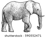elephant illustration  drawing  ... | Shutterstock .eps vector #590552471