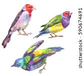 colorful tropical birds set... | Shutterstock . vector #590674691