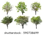 collection of tree isolated on... | Shutterstock . vector #590738699