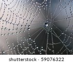Spider Net With Water Drops ...