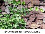 gabione with fern  | Shutterstock . vector #590802257