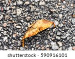 leaf in gravel | Shutterstock . vector #590916101