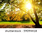 Sunlighted Yellow Autumn Tree...