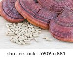 close up of ling zhi mushroom ... | Shutterstock . vector #590955881