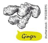 ginger sketch. harvesting | Shutterstock .eps vector #591038591