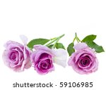 Beautiful Roses Isolated On A...
