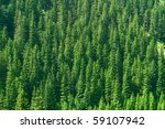 Full Image Of Coniferous Trees...