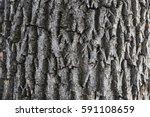 tree bark texture | Shutterstock . vector #591108659